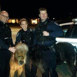 Cops Take Miniature Horses Into Custody