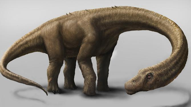 This undated artist rendering provided by the Carnegie Museum of Natural History shows the Dreadnoughtus. The dinosaur Dreadnoughtus had a 37-foot-long neck, 30-foot tail, and weighed an estimated 65 tons. In life, Dreadnoughtus was an herbivore that likely spent much of its life eating massive quantities of plants to maintain its enormous body size. (AP Photo/Carnegie Museum of Natural History, Mark A. Klingler)
