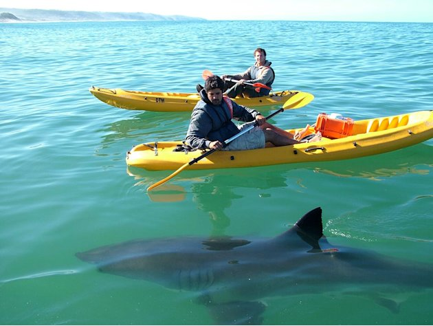 Dave Salmoni with Ryan Johnson, shark expert in South Africa as seen on Shark Tribe. 