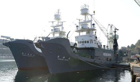 Japanese whaling vessel Yushin Maru (R) and Yushin Maru No.2 are seen before they leave for the Antartic Ocean at a port in Shimonoseki