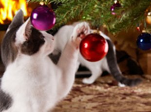 Bad kitty! Breakable ornaments are just one holiday hazard for pets.