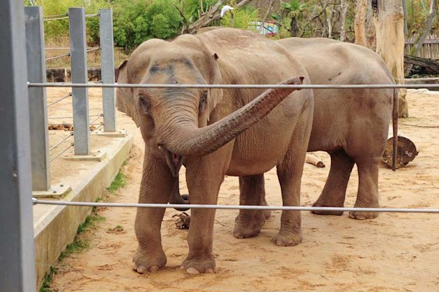 Tonzi was allegedly beaten at Twycross Zoo