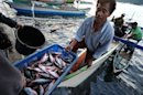 Fishermen at work in Sulawesi province