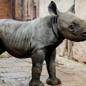 Drones Are Helping Save Rhinos From Extinction