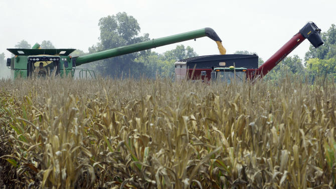 In this photo taken July 16, 2012, harvested corn is dumped from a combine, left, into a hopper being towed by a tractor near Altheimer, Ark. The U.S. Agriculture Department Friday, Aug. 10, cut its projected U.S. corn production by 17 percent from its forecast in July, and 13 percent from last year. (AP Photo/Danny Johnston)