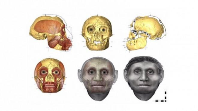 The path Dr. Hayes took to reach her facial approximation of the 'Hobbit.'