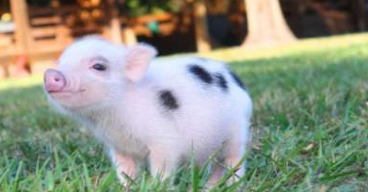 20+ Miniature Animals That Will Make Your Day