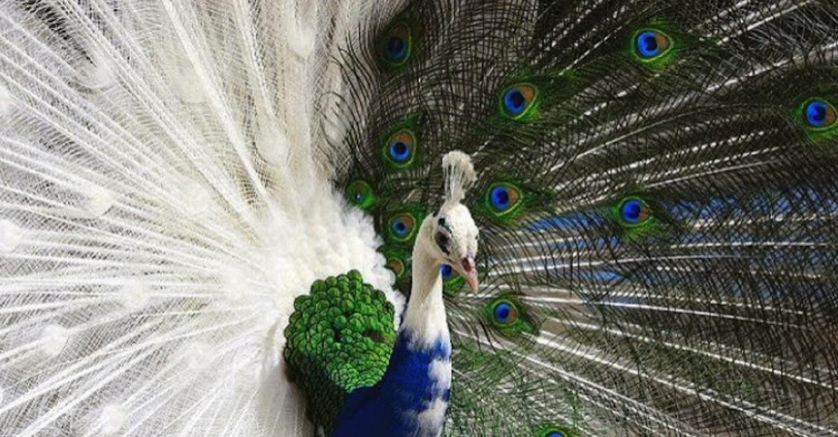 13 Naturally Color-Mutated Animals