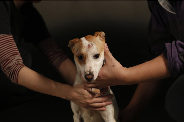 In this photo taken on Monday, April 9, 2012, in a makeshift studio, Taiwanese photographer Tou Chih-kang  and his assistant steady a scared dog for a portrait in the final moments of its life before