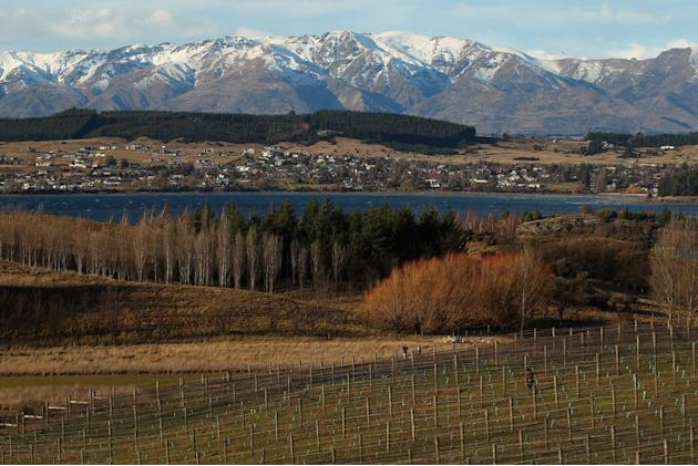 Otago New Zealand wine region