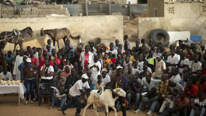 "In this Wednesday, Oct. 3, 2012 photo, spectators look on as handlers coax ram Goor around the ring during the SICAP neighborhood regional final of the Khar Bii competition, which seeks to find the best sheep in Senegal ahead of the Eid al-Adha festival, in Dakar, Senegal. In a nation where sheep are given names and kept inside homes as companion animals, the most popular show on television is ""Khar Bii,"" or literally, ""This Sheep"" in the local Wolof language. It's an American Idol-style nationwide search for Senegal's most perfect specimen. (AP Photo/Rebecca Blackwell)"