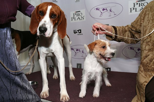 The Westminster Kennel Club 137th Annual Dog Show - Press Conference