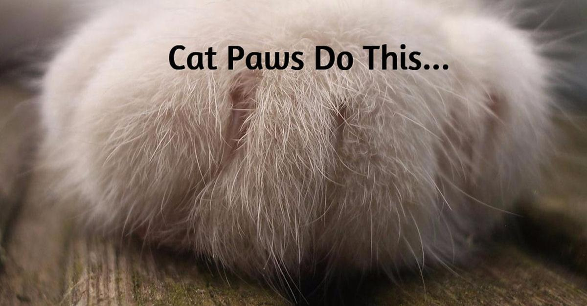 9 Fascinating Facts about Your Cat's Paws