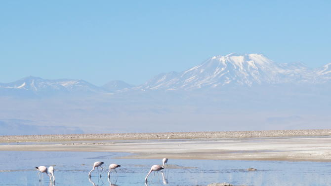 "This August 2012 photo shows flamingos on the Atacama salt lake (Chaxas Lagoon) at the ""Los Flamencos"" National Park in Chile.  The birds come here to eat krill trapped in the water. (AP Photo/Karen Schwartz)"