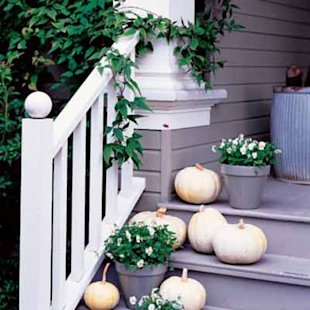 White pumpkins and violas capture the fading daylight