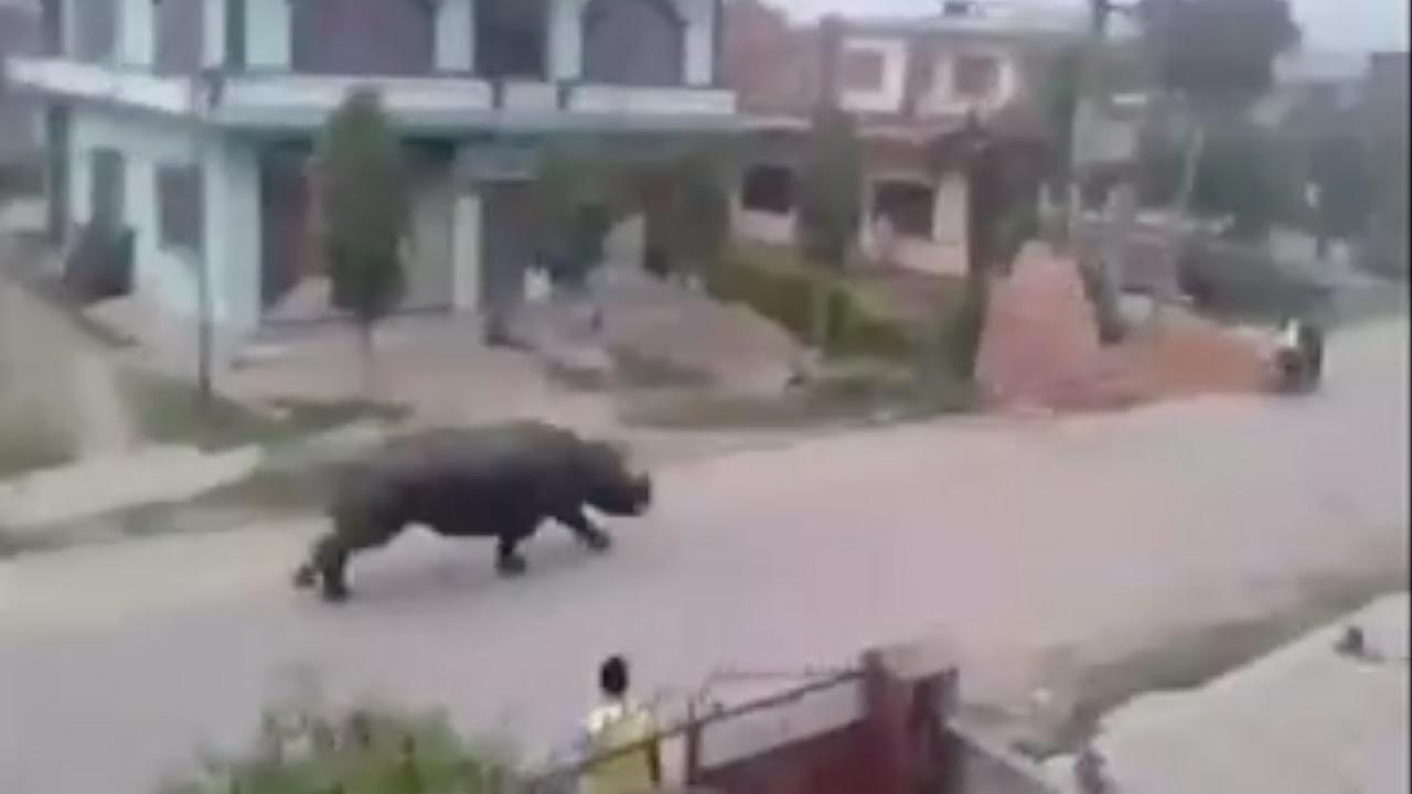 Runaway rhino kills one, injures six in Nepal