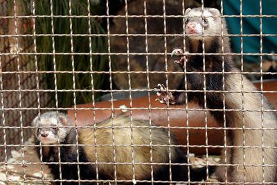 End the war on ferrets