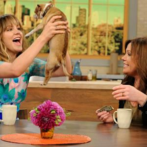 Katharine McPhee's Dog Crashes the 'Rachael Ray' Set