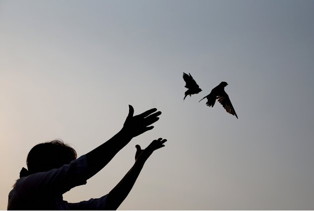 A woman releases sparrows as an offering to mourn Cambodia's former King Norodom Sihanouk in Phnom Penh, Monday, Feb. 4, 2013. Sihanouk's body had been lying in state at the Royal Palace after being f