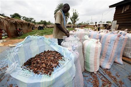 Man sews up sacks full of cocoa beans for sale in Daloa