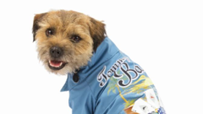 This image provided by PetSmart shows a dog in Tommy Bahama beach wear.  Tommy Bahama Pets will be in PetSmart Inc. stores through August. There's a designer shirt and a dress with a ruffled skirt made with Bahama's traditional hibiscus fabric. There are other shirts with palm trees and fish and chips, an Aloha Tee, hats and toys in the shape of thongs. (AP Photo/PetsMart)