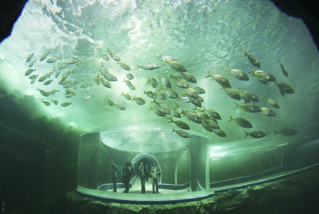 "Visitors tour an aquarium during a media day of Expo 2012, in Yeosu, South Korea, Wednesday, May 9, 2012. The expo will open for three months on May 12 under the theme of ""The Living Ocean and Coast:"