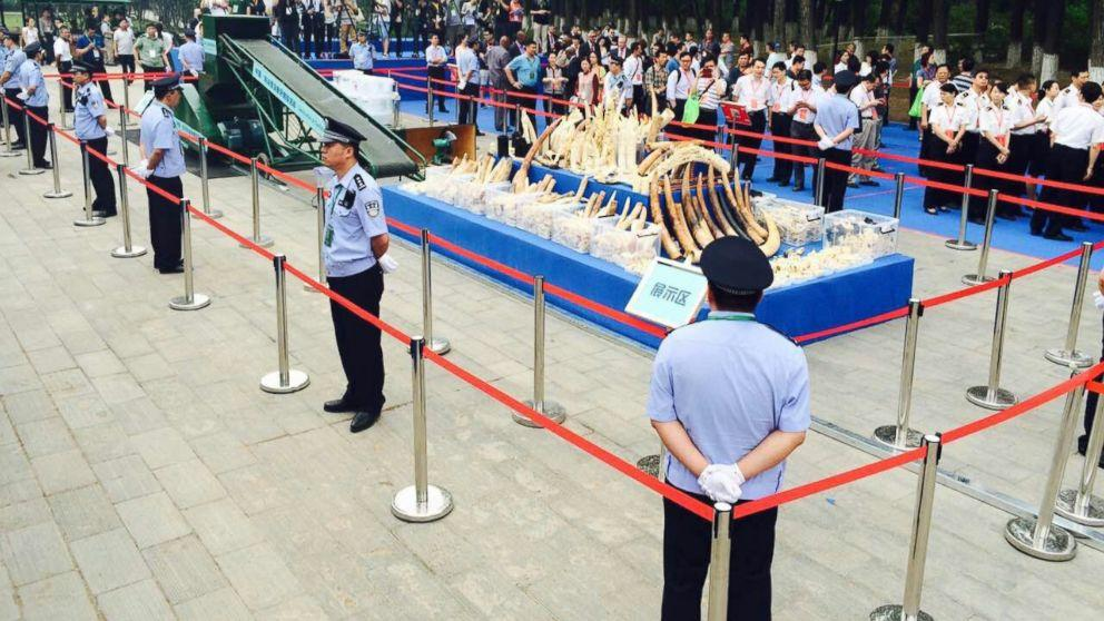 China Pulverizes Ivory to Combat Illegal Trade