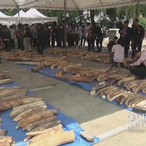 3 tons of illegal ivory seized