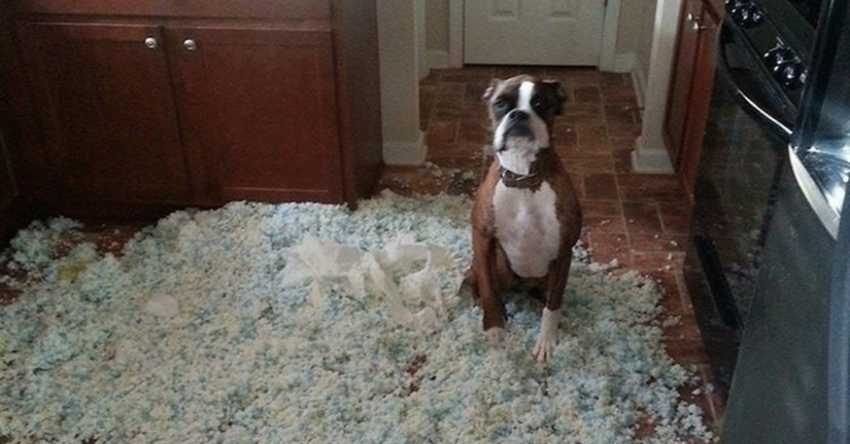 19 Obviously Guilty Dogs Who Are Too Cute