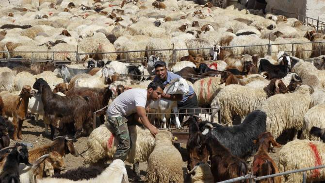 A trader waits for customers at a livestock market, ahead of Eid al-Adha in Amman
