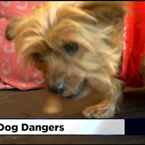 What Your Pets Should Avoid On Thanksgiving