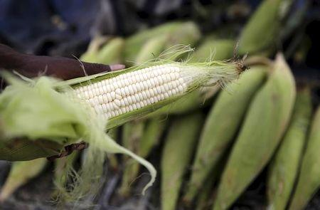 South Africa must admit national drought crisis to help farmers: Grain SA