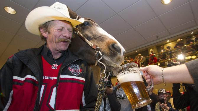 The Calgary Stampeders horse Tuffy and rider Armstrong get served some beer after they rode through the lobby of the Holiday Inn hotel at the CFL's 102nd Grey Cup week in Vancouver.