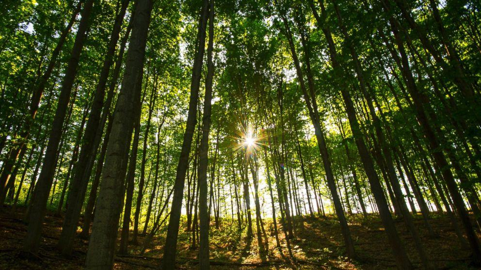The Number of Trees on Earth May Surprise You