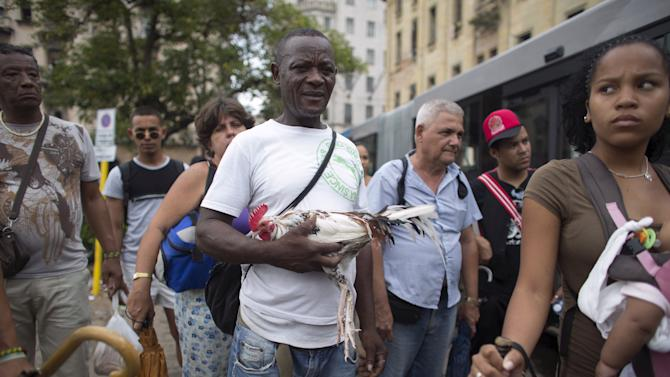 Heriberto Ferreira holds his fighting rooster as he waits for a bus in downtown Havana