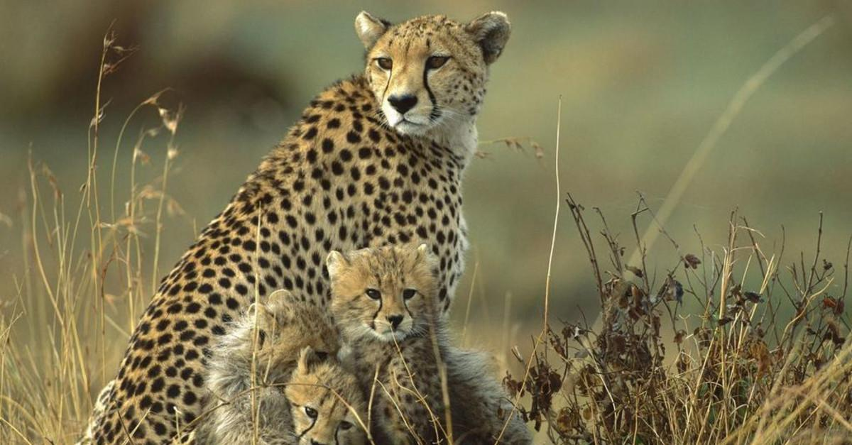 Animal Moms with Their Babies Are Beyond Precious