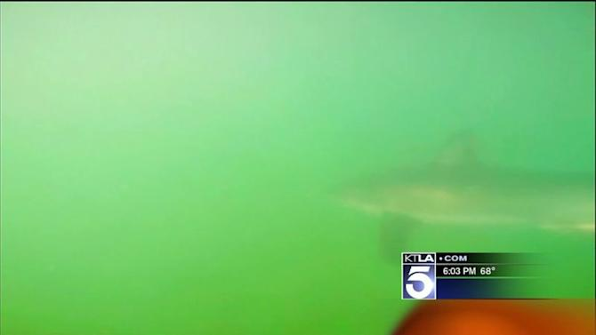 Paddleboarder`s Video Camera Captures Encounter With Shark