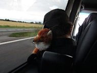 Noodles sleeping in the tour van using a stuffed fox for a pillow.