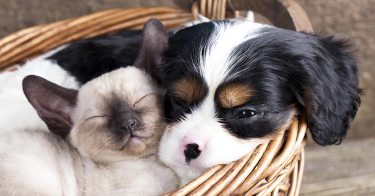 The Cutest Sleeping Animals You'll Ever See