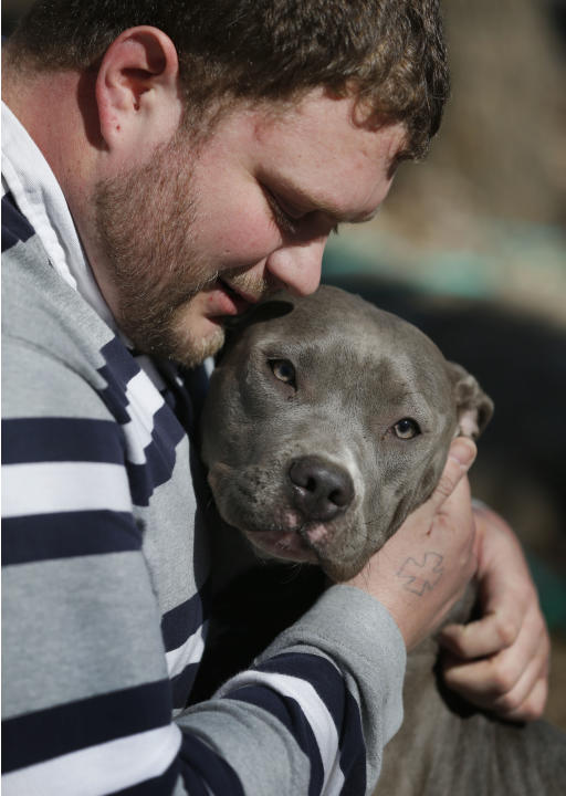 Cameron Younglove plays with a pit bull terrier named Sooke at his kennels near Eudora, Kan., Sunday, March 9, 2014. The kennel raises their dogs indoors in a family environment and are socialized wit