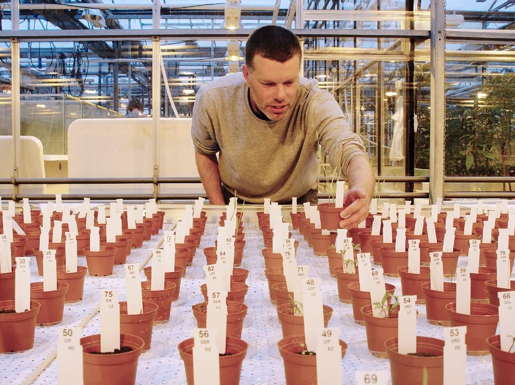 Dutch crops grown on 'Mars' soil found safe to eat