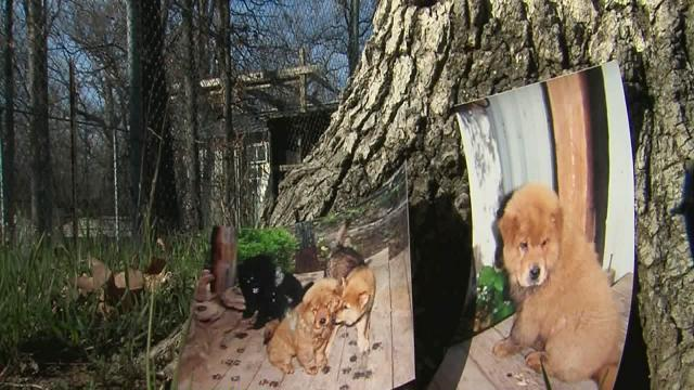 Family's dogs shot during burglary