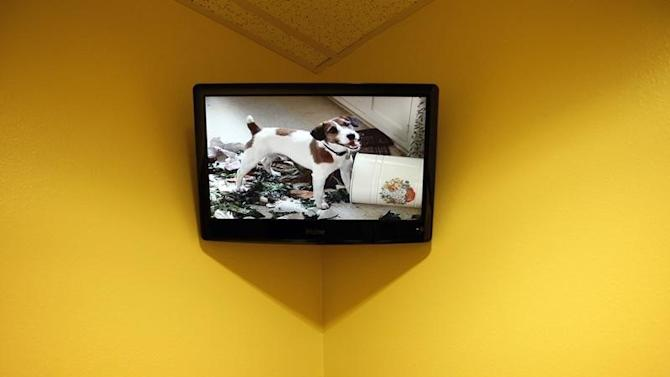 A dog appears in a movie on a television inside a private dog suite at a PetSmart PetsHotel and Doggie Day Camp in Los Angeles