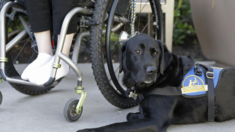 """In this photo taken Tuesday, Oct. 8, 2013, Caspin a service dog sits below Wallis Brozman outside at a shopping mall in Santa Rosa, Calif. Other victims of unruly fake service dogs are real service dogs, said Brozman, 27, of Santa Rosa. She has dystonia, a movement disorder that left her unable to walk and barely able to talk. She needs a wheelchair, voice amplifier and her service dog who responds to English and sign language. """"When my dog is attacked by an aggressive dog, he is not sure what to do about it and looks to me. It becomes a safety issue, not only for my dog, the target of the attack, but me if I am between the dogs,"""" Brozman said. (AP Photo/Eric Risberg)"""