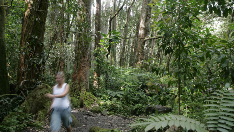 FILE - This May 30, 2007 file photo shows a hiker on the Manoa Falls Trail in Oahu's Manoa Valley,  in Honolulu. This is one of the most popular hikes on Oahu, loved by tourists and locals for its natural beauty. (AP Photo/Marco Garcia, file)