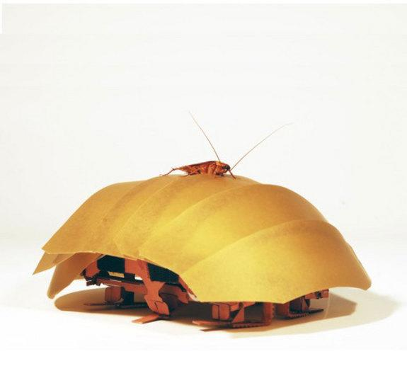 In a Tight Spot? Robo-Roach Can Flatten Itself to Help