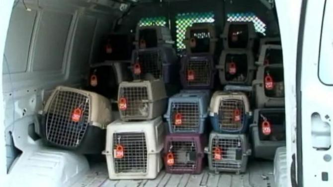 100 Cats Rescued from House Belonging to Hoarder Twin Sisters