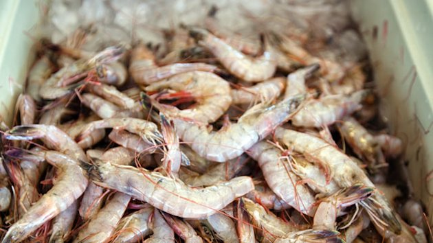 Antibiotics Illegal in the US Found in Samples of Foreign Shrimp (ABC News)