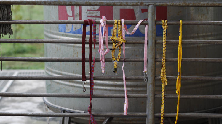 In this photo taken on Monday, April 9, 2012, the leashes of dogs put down that day hang from a metal fence at a government-run shelter in Taoyuan, northern Taiwan. In an ongoing project, Taiwanese photographer Tou Tou Chih-kang makes portraits of shelter dogs in the final moments of their lives before they are put down by lethal injection. Tou has been visiting dog shelters for two years now, making human-like portraits that give a sense of dignity and esteem to some 400 canines, in hopes of educating the public on the proper care of pets. This year Taiwanese authorities will kill an estimated 80,000 stray dogs at 38 pounds scattered throughout the island. (AP Photo/Wally Santana)