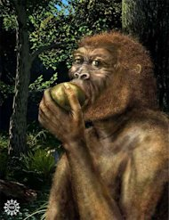 The first specimen of Paranthropus boisei, also called Nutcracker Man, was reported by Mary and Louis Leakey in 1959 from a site in Olduvai Gorge, Tanzania.